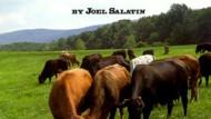 Meet the Farmer – Joel Salatin Part 3